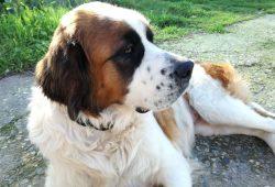 Airgentum Artists REsidence Dog Lua