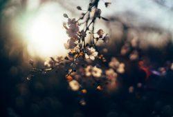 flowers_sunset in Airgentum Hoja de Ruta